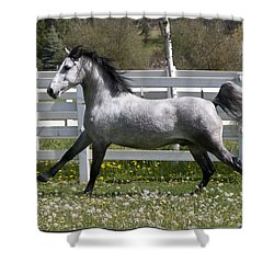 Conversano Catalina IIi Shower Curtain by Wes and Dotty Weber
