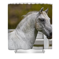Conversano Mima Shower Curtain by Wes and Dotty Weber