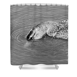 Shower Curtain featuring the photograph Cool Dip by Anita Oakley