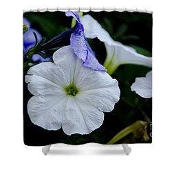 Shower Curtain featuring the photograph Cool Summer Petunias by Wilma  Birdwell