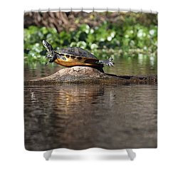 Cooter On Alligator Log Shower Curtain by Paul Rebmann