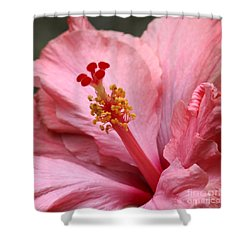 Coral Hibiscus Shower Curtain by Sabrina L Ryan