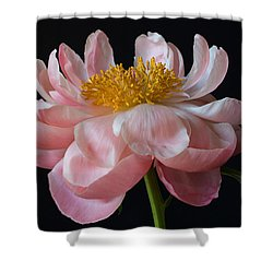 Coral Peony Shower Curtain