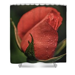 Coral Rosebud Shower Curtain