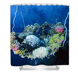Corals On Ship Wreck Shower Curtain