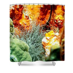 Shower Curtain featuring the photograph Corkscrew Anemone Grove by Amy McDaniel