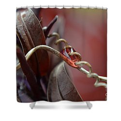 Shower Curtain featuring the photograph Corkscrew by Michelle Meenawong