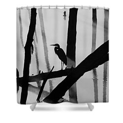 Cormorant And The Heron  Bw Shower Curtain
