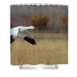 Shower Curtain featuring the photograph Corn And Geese by Ruth Jolly