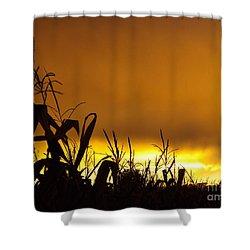 Corn At Sunset Shower Curtain