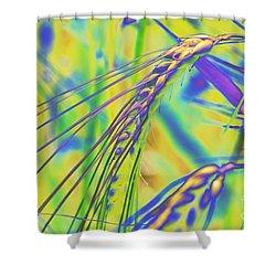 Corn Shower Curtain by Carol Lynch