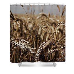 Shower Curtain featuring the photograph Corn Field by Vicki Spindler