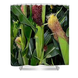Corn Growing Shower Curtain