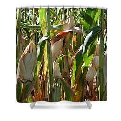 Corn Shower Curtain by Joseph Yarbrough