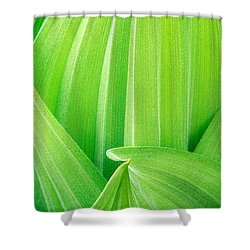 Shower Curtain featuring the photograph Corn Lily Leaf Detail Yosemite Np California by Dave Welling