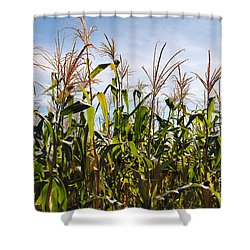 Corn Production Shower Curtain by Carlos Caetano