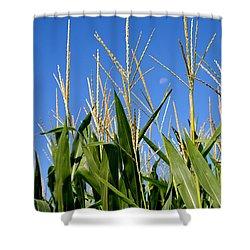 Corn Tassels And Moon Shower Curtain