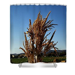 Shower Curtain featuring the photograph Corn Top by Michael Gordon