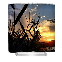 Cornfield Sundown Shower Curtain by Angela Rath