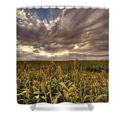 Cornfield Sunset  Shower Curtain by Saija  Lehtonen
