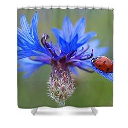 Shower Curtain featuring the photograph Cornflower Ladybug Siebenpunkt Blue Red Flower by Paul Fearn