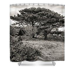 Cornish Delights Shower Curtain