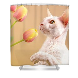 Cornish Rex Cat Shower Curtain by Verena Matthew