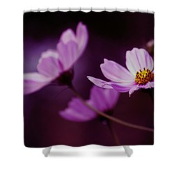 Shower Curtain featuring the photograph Cosmo After Glow by Kay Novy
