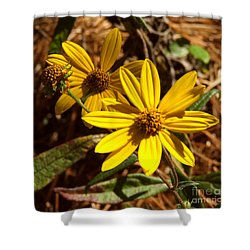 Cosmos Flower Shower Curtain by Andrea Anderegg