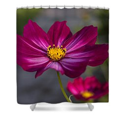 Cosmos Flower Shower Curtain