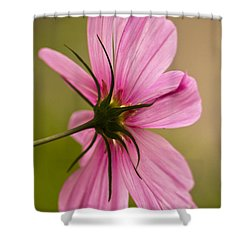 Cosmos In Pink Shower Curtain