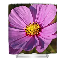 Cosmos Love Shower Curtain by Julie Andel