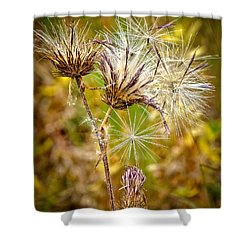 Shower Curtain featuring the photograph Cotten Grass by Jim Thompson