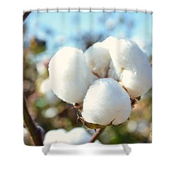 Cotton Boll Iv Shower Curtain