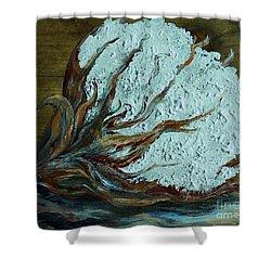 Cotton Boll On Wood Shower Curtain by Eloise Schneider