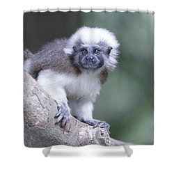 Shower Curtain featuring the photograph Cotton Top Tamarin  by Shoal Hollingsworth
