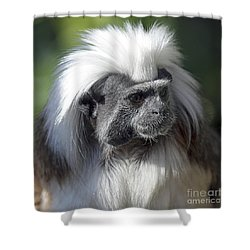 Cottontop Tamarin Saguinus Oedipus Shower Curtain