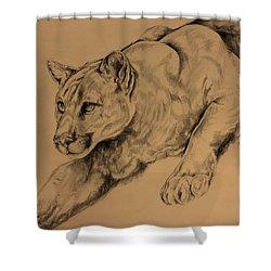 Cougar Shower Curtain by Derrick Higgins