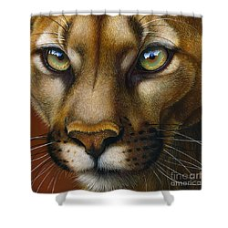 Cougar October 2011 Shower Curtain by Jurek Zamoyski