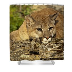 Cougar On Lichen Rock Shower Curtain