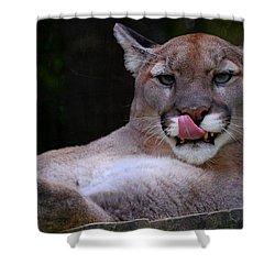 Cougar Town Shower Curtain