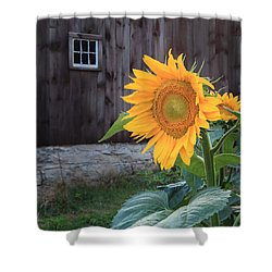 Country Flower Square Shower Curtain by Bill Wakeley