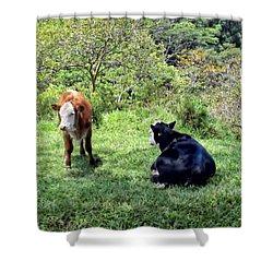 Shower Curtain featuring the photograph Cow 4 by Dawn Eshelman