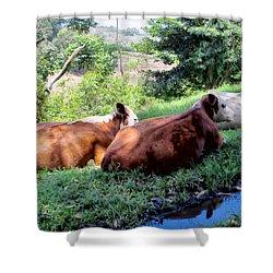 Shower Curtain featuring the photograph Cow 6 by Dawn Eshelman