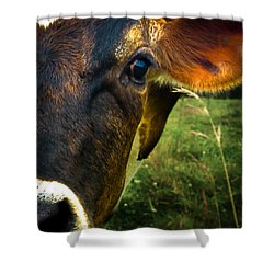 Cow Eating Grass Shower Curtain