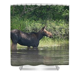 Cow Moose Breakfast Shower Curtain
