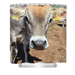 Cow On Alpine Pasture Shower Curtain by Antonio Scarpi