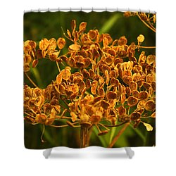 Shower Curtain featuring the photograph Cow Parsnip Seeds by Sandra Foster