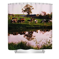 Cows In The Canal Shower Curtain by Martin Howard