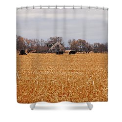 Cows In The Corn Shower Curtain by Mary Carol Story